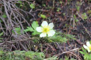 01_wildflower[1]