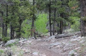 03_trail