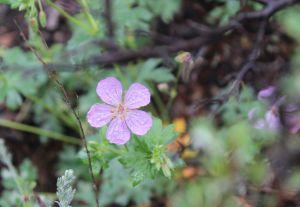 07_flowerp