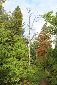 09_treesonpath