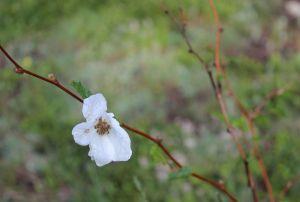 14_flowerw