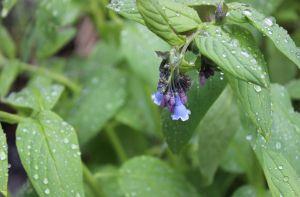 18_flowerdarkb