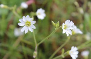 26_flowersw