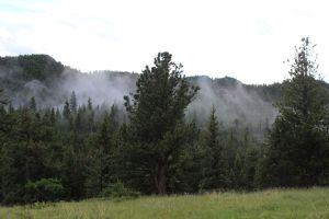 33_fog