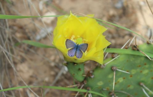5_butterfly